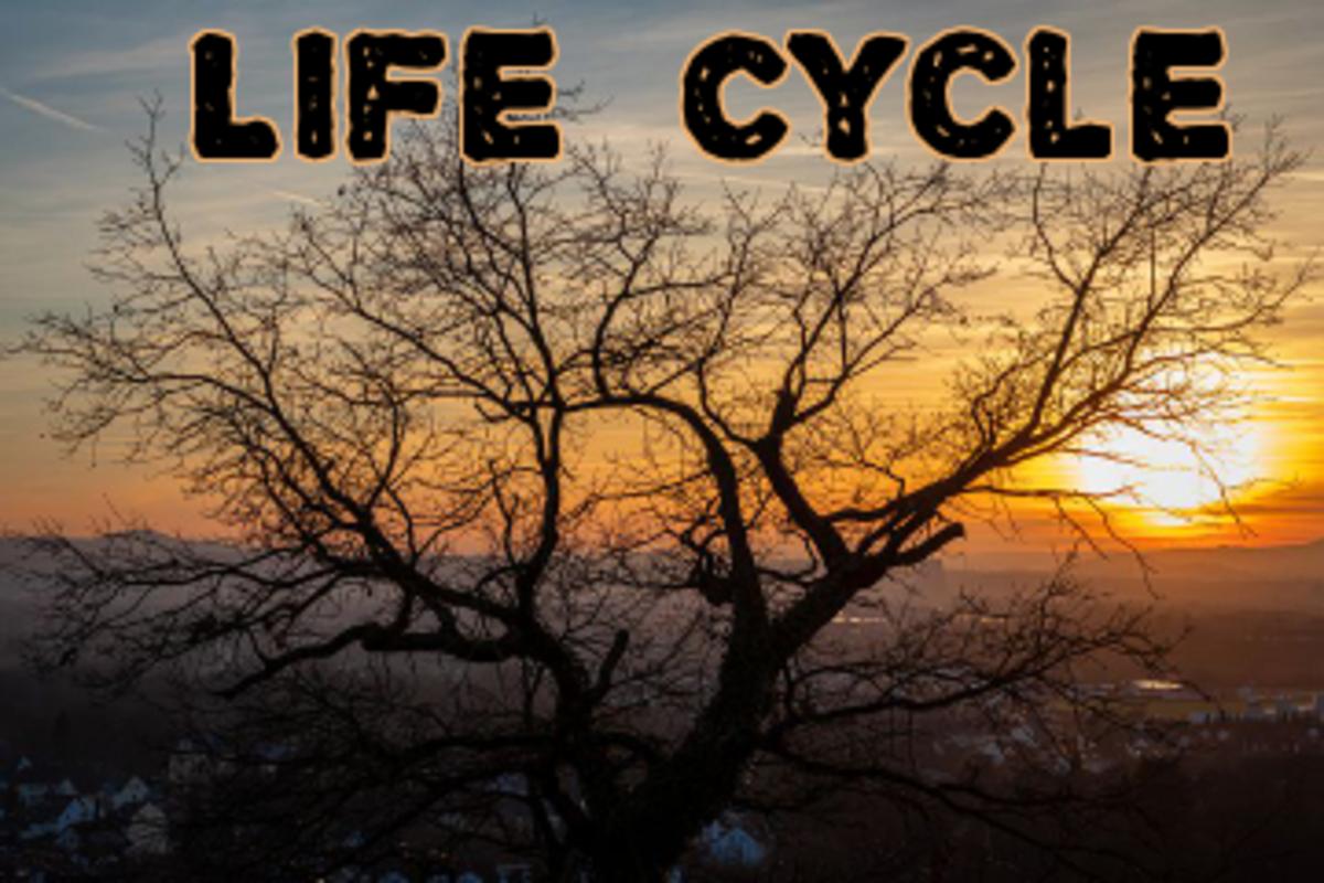 poem-life-cycle