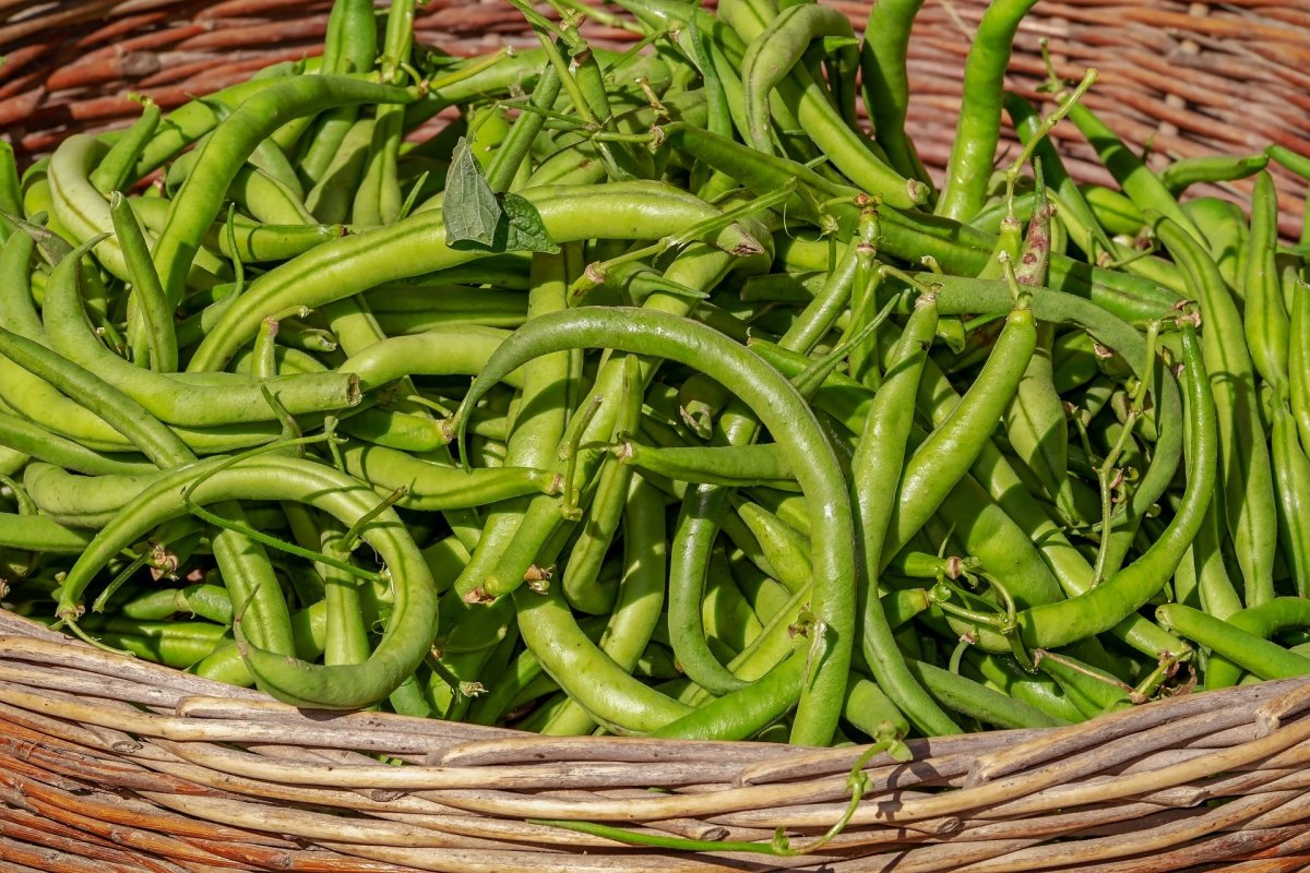 Beans/Faliyan/ਫਲੀਆਂ