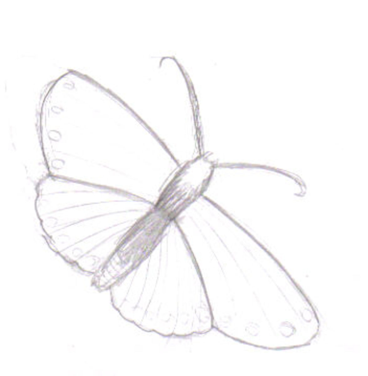 Drawing a butterfly.