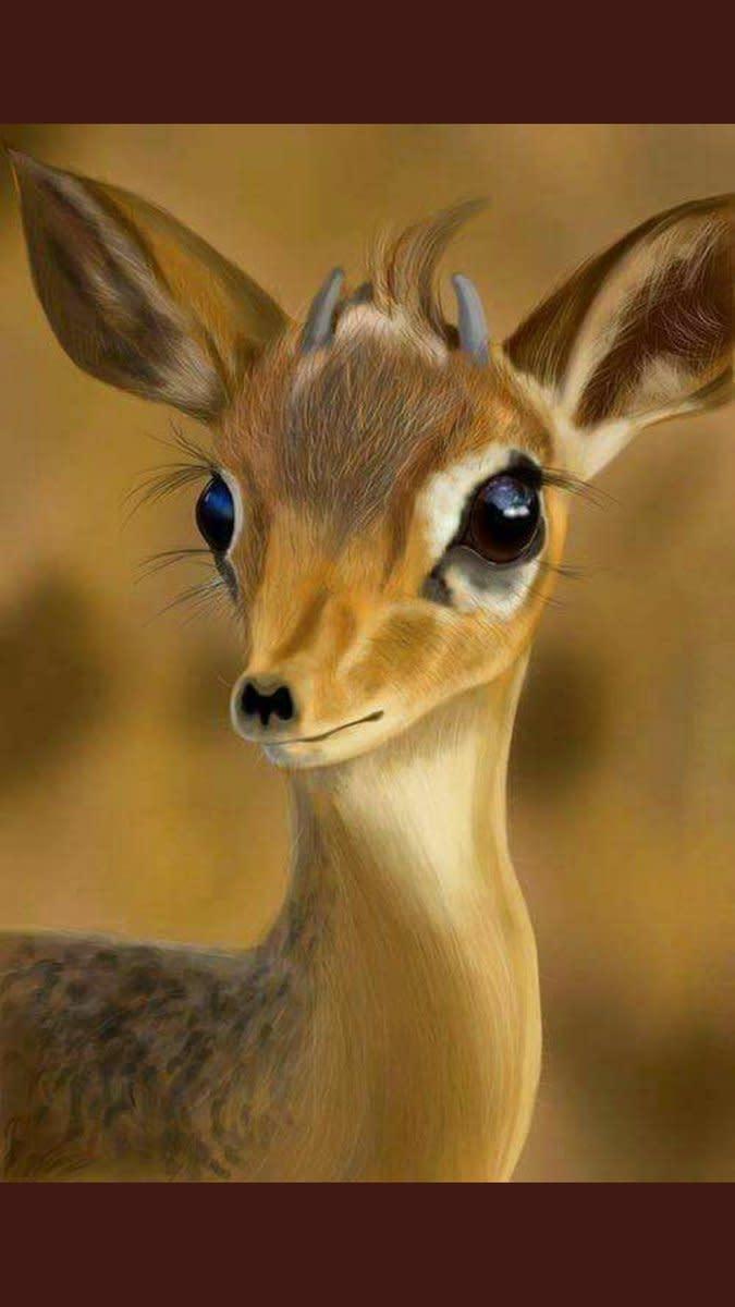 Female Goitered Gazelle.