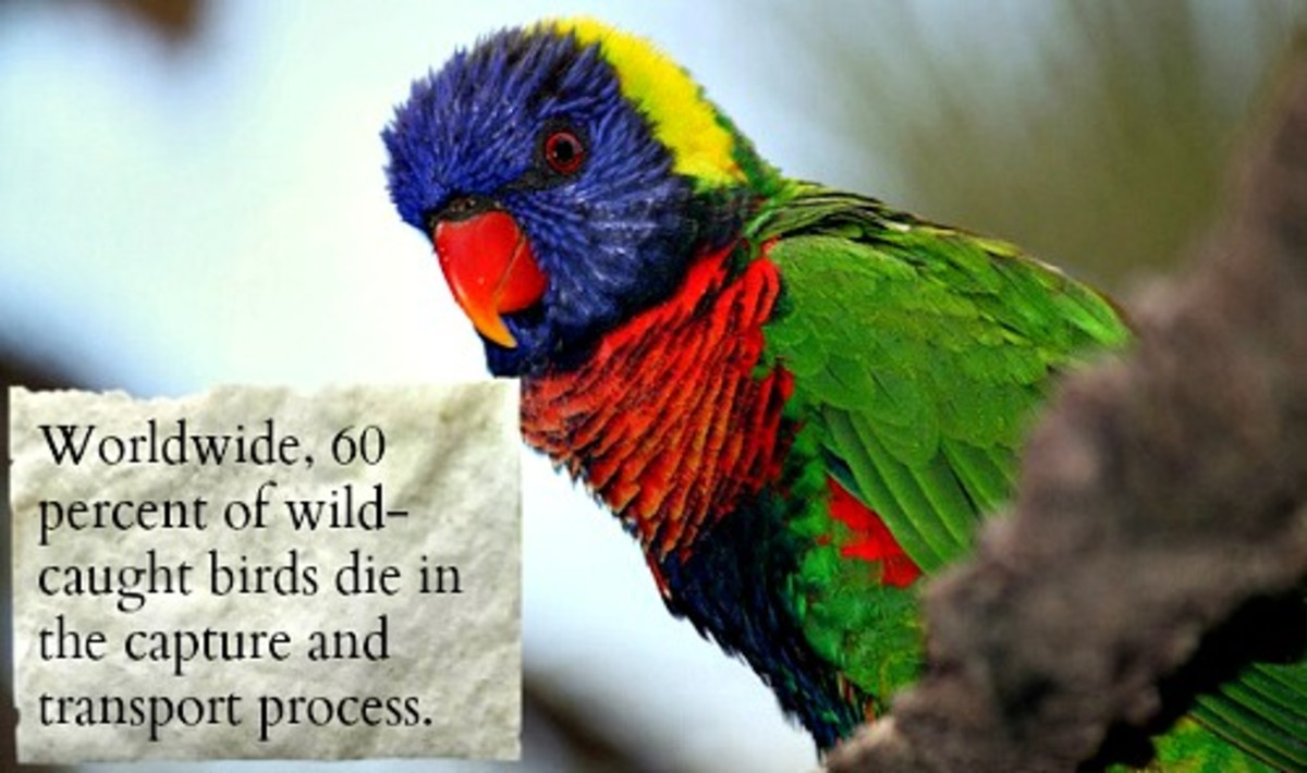 Save these rare Exotic Breeds of birds from captivity by giving up on them