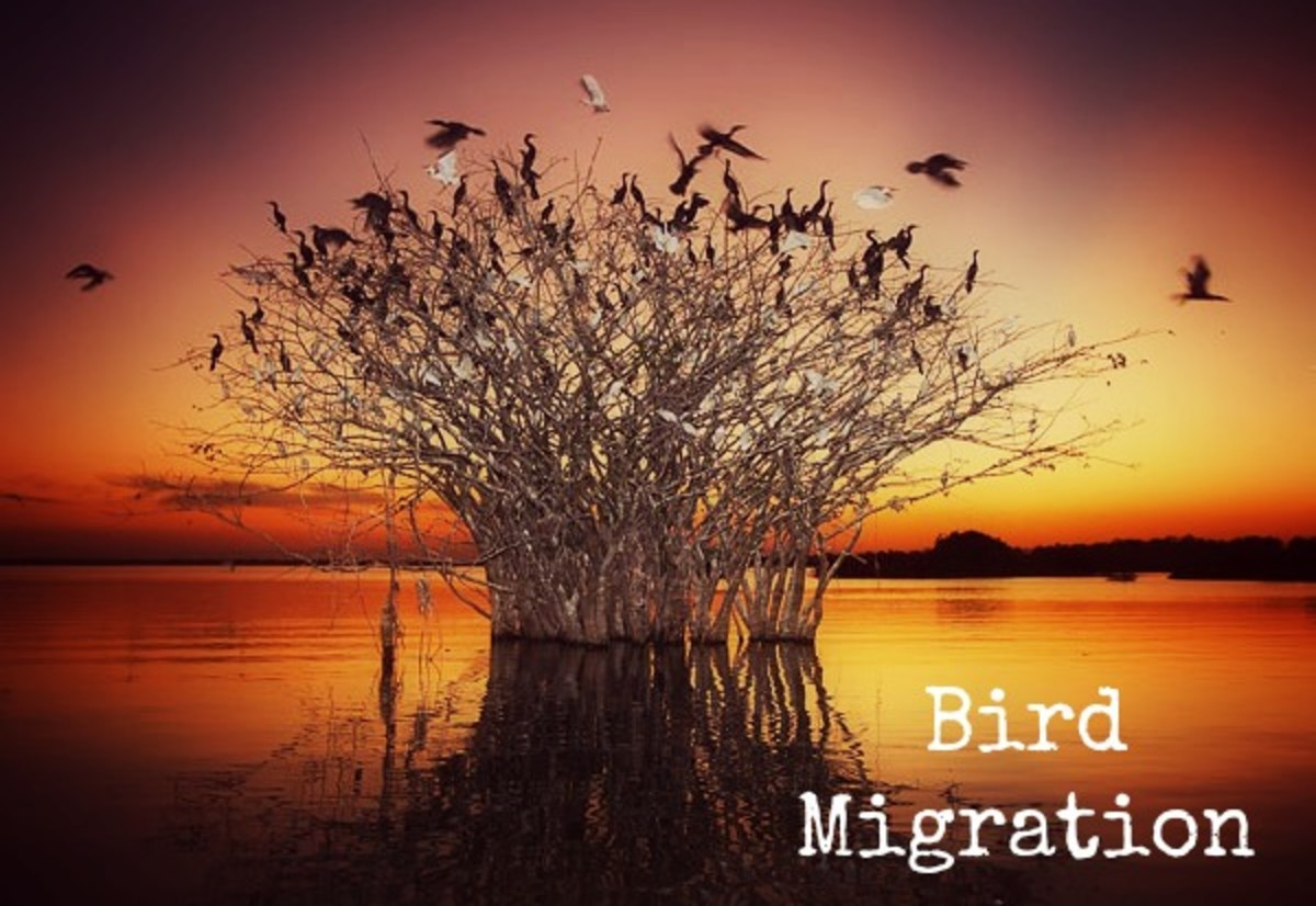 Create Artificial Builds for Migrating Birds