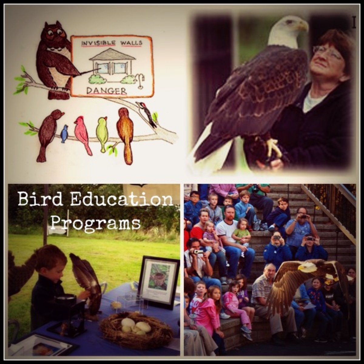 Arrange Formal/ Informal Bird Education Programs in Schools