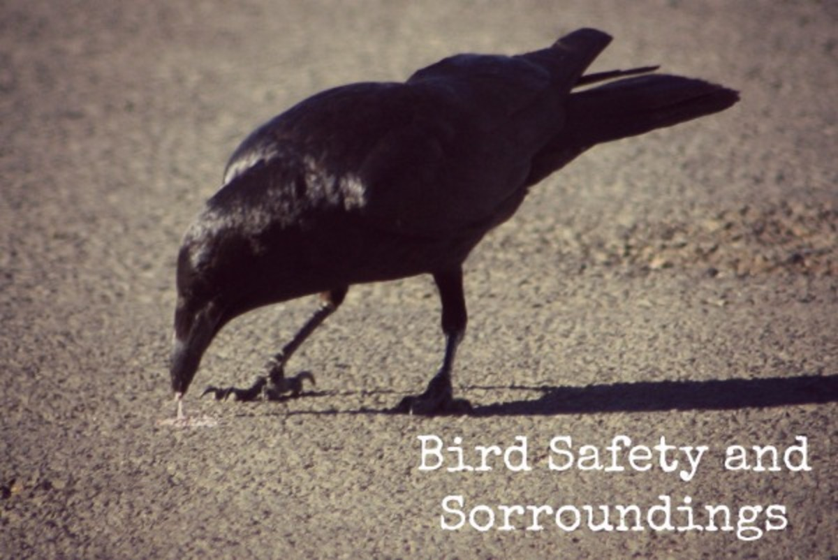 Keep Surroundings Clean for Bird Safety