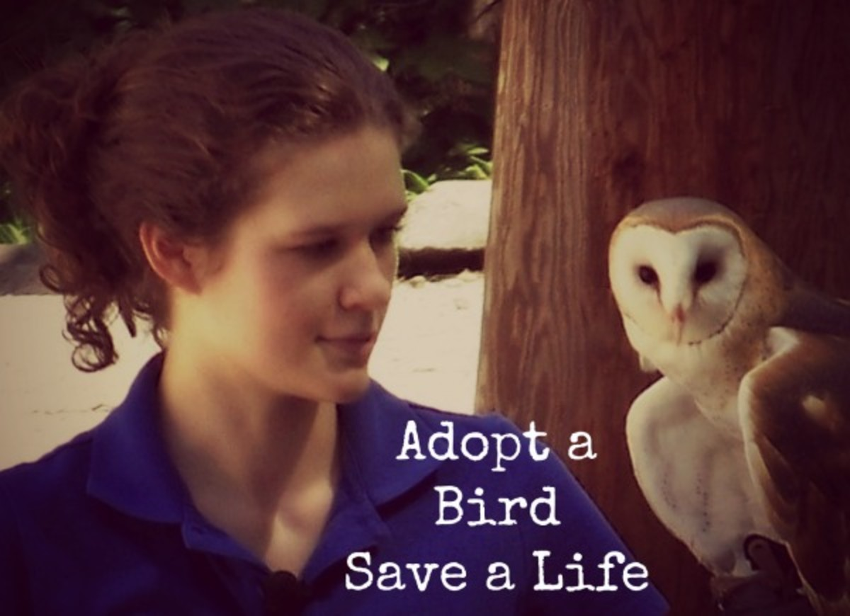 Adopt a Native Bird or Someone in Need