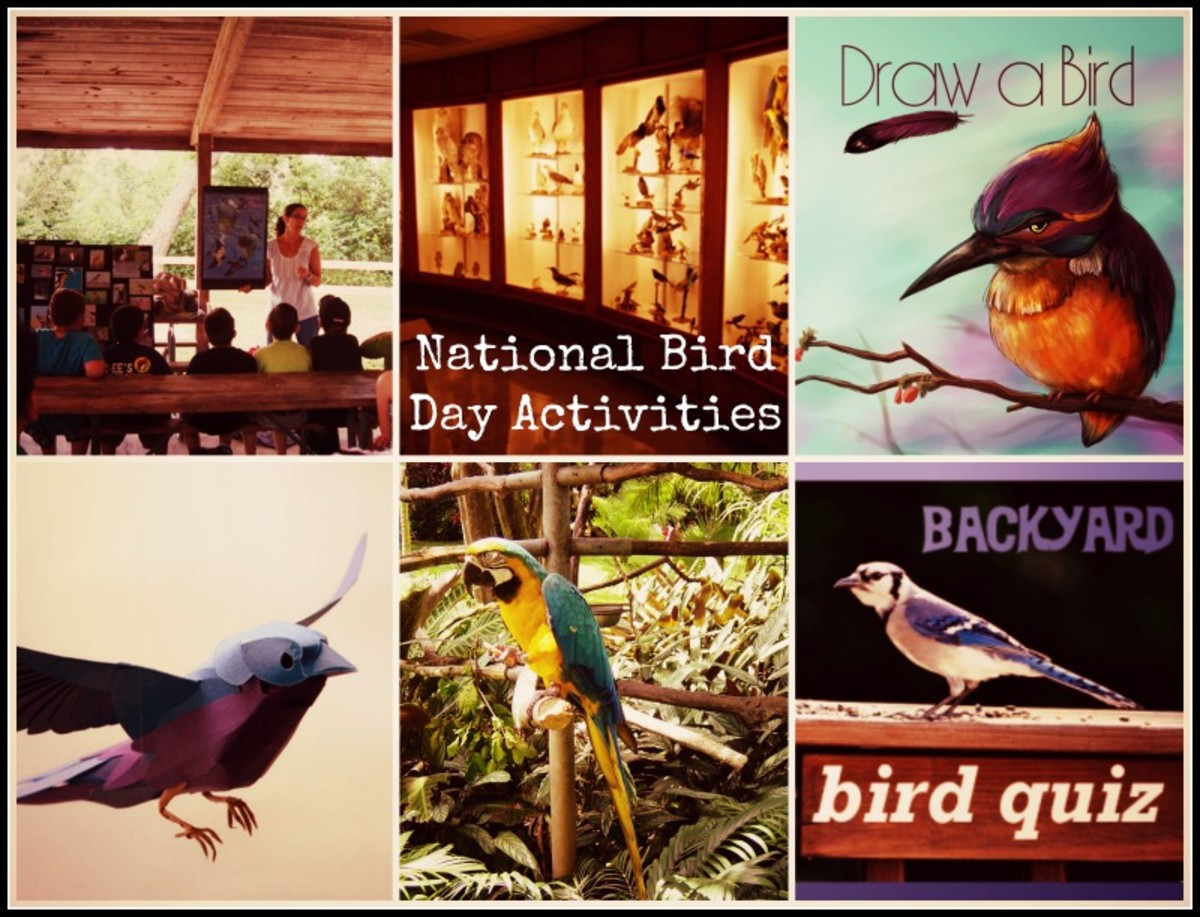 Host National Bird Day Crafting, Games and Fun Activities