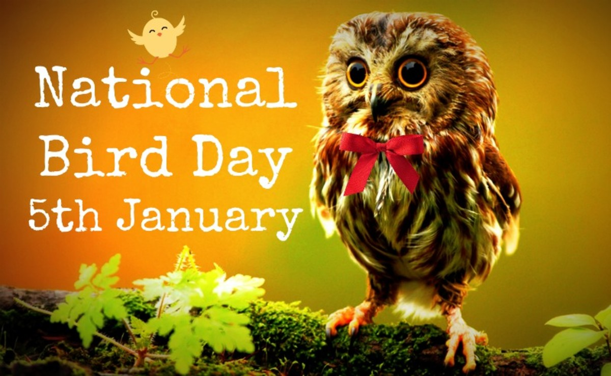 How to Celebrate National Bird Day (5th January)