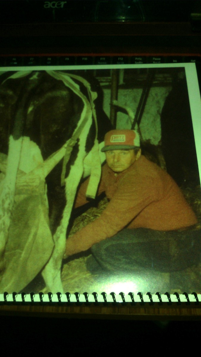 Dad milking a cow in the1980s