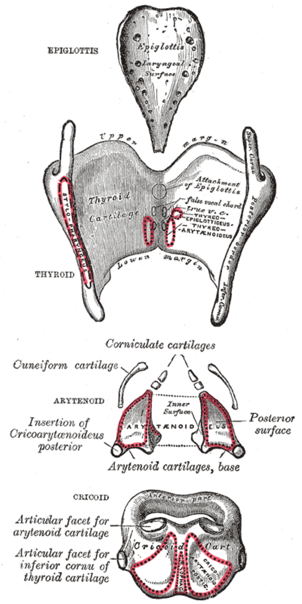 human-anatomy-lesson-20