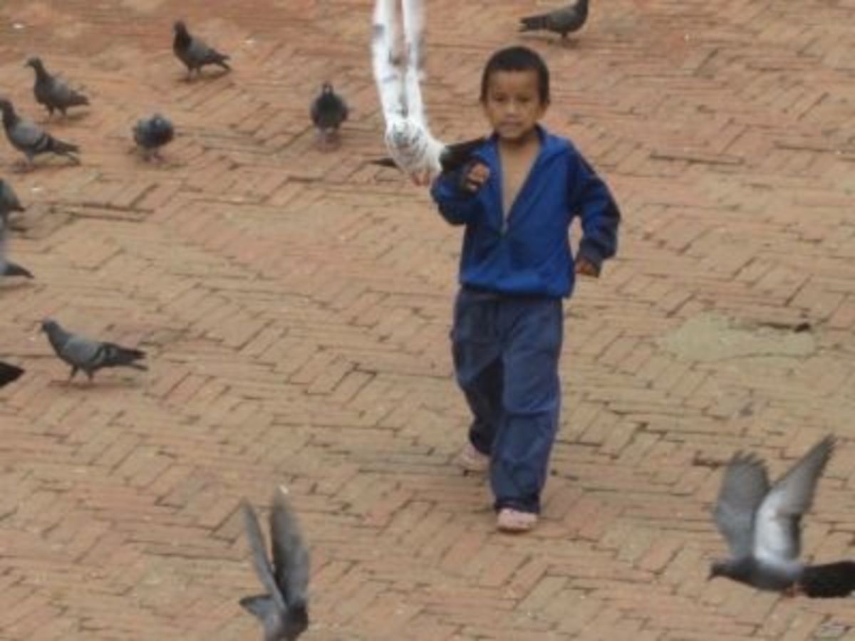 I saw this boy chasing pigeons nearly every day ... and then he'd feed them.