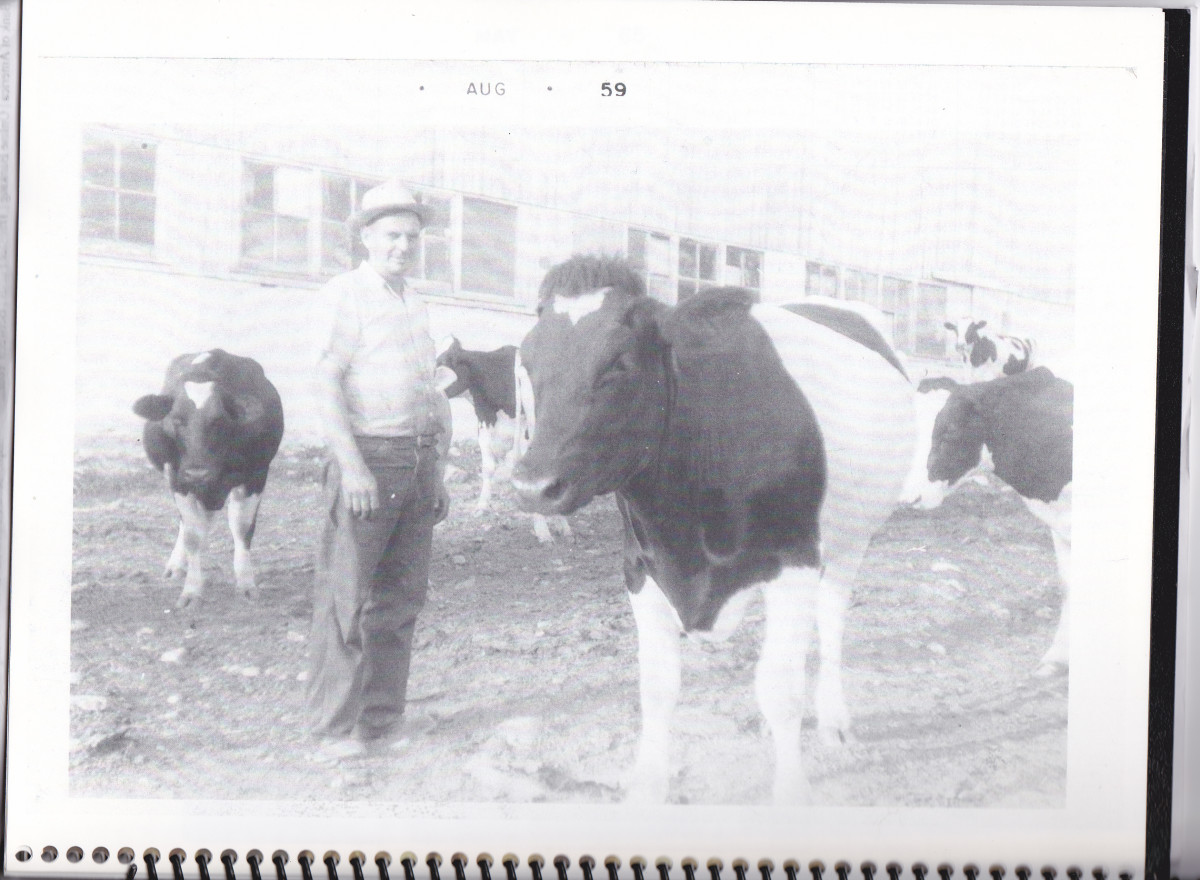 Dad and some of our cows in 1959.