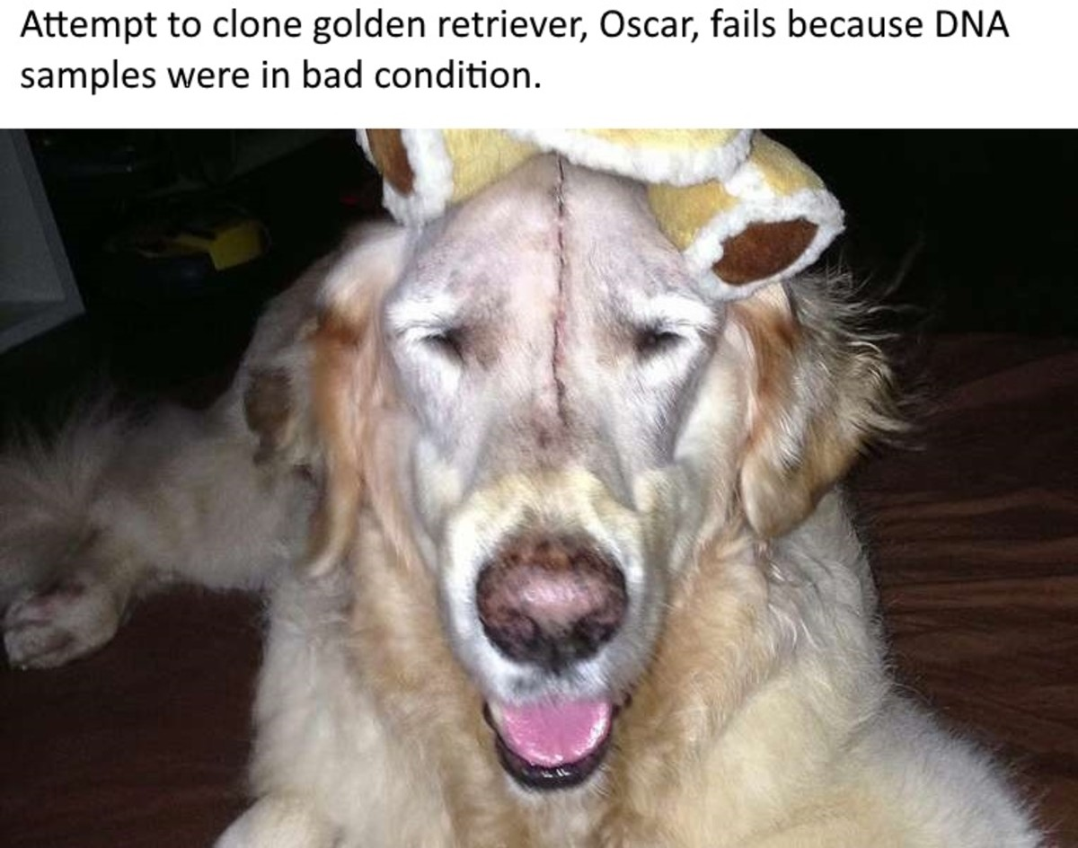 Oscar was such a special dog that the three of them decided to pool their money and have it cloned after it died last year, aged 13.