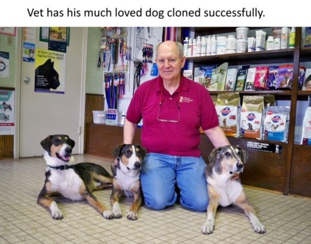 Phillip had Melvin cloned about two years ago, and he now has two identical dogs – Ken Gordon, named after his uncle, and Henry Fontenot, named after his friend – with the same traits and characteristics as Melvin.