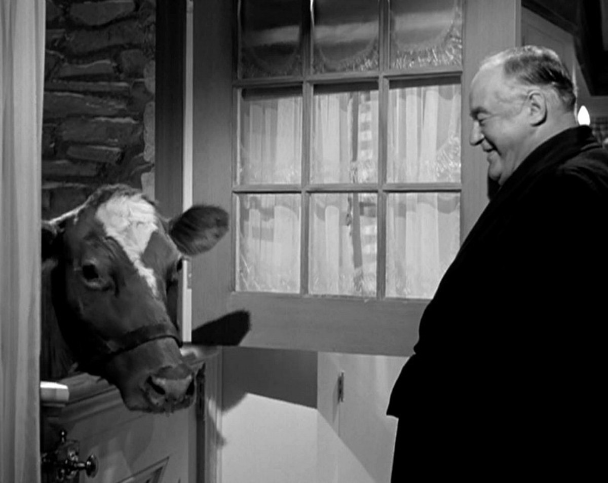Sydney Greenstreet looking at a cow