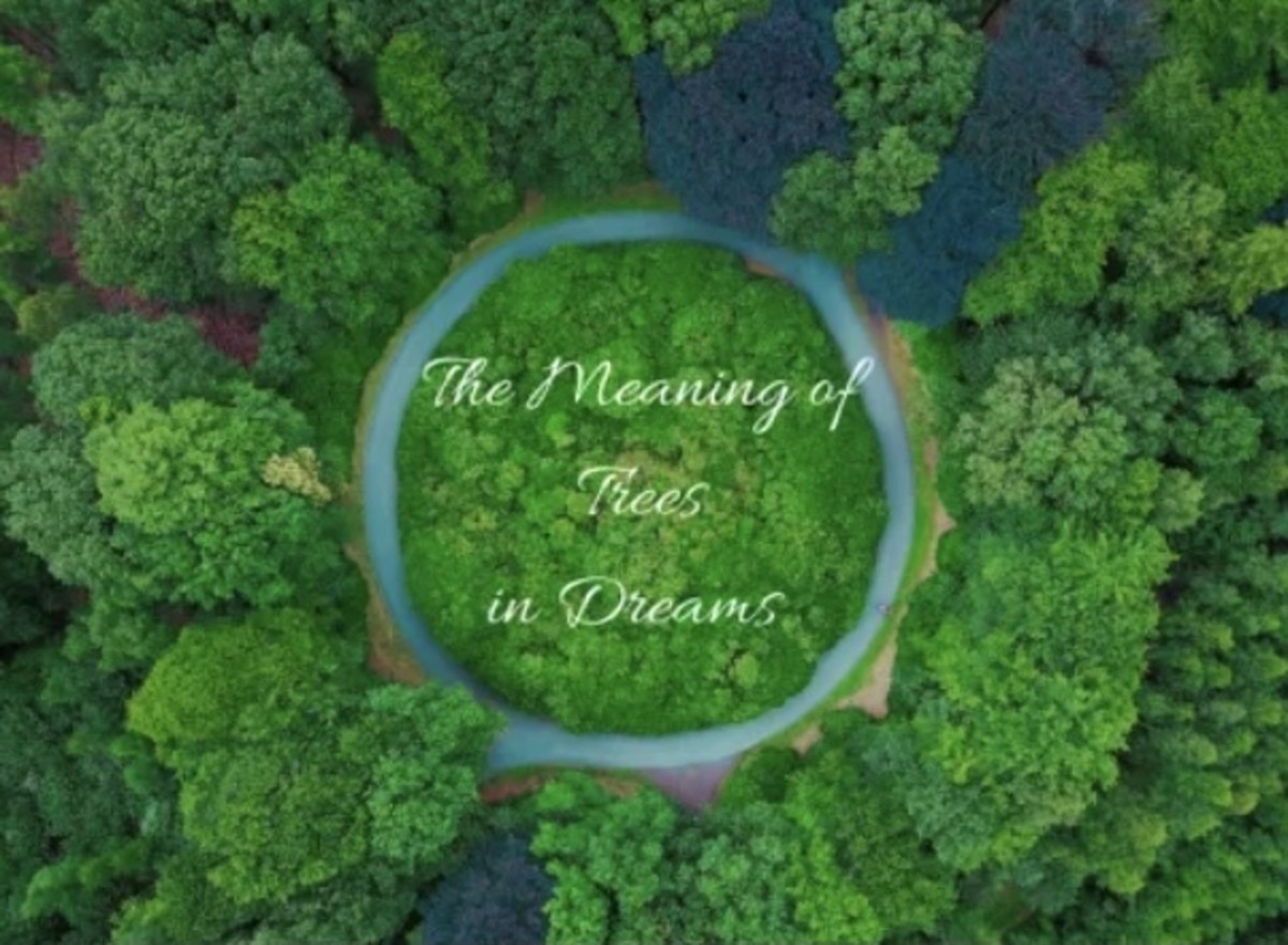 the-meaning-of-dreams-about-trees-dream-interpretation-and-dream-symbols
