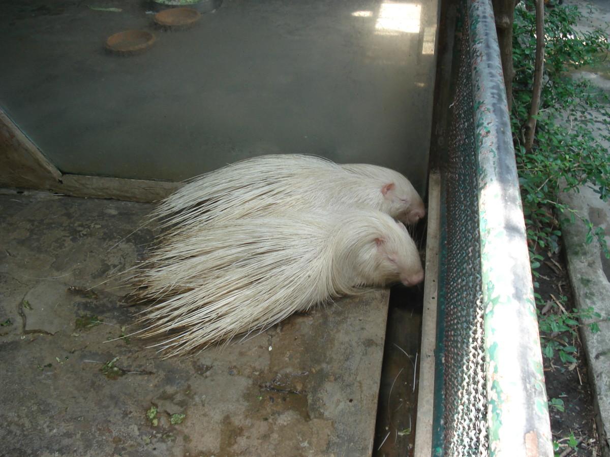 pata-zoo-in-bangkok-thailand