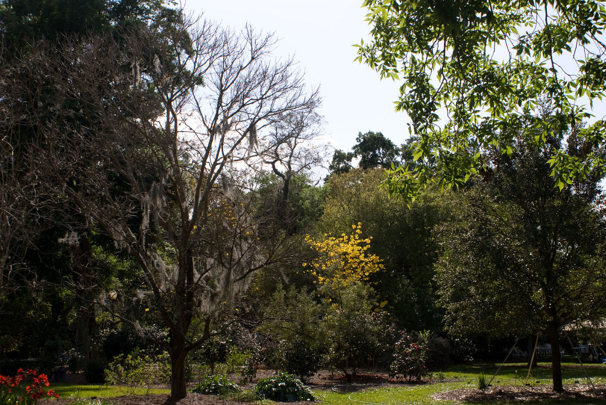 Harry P. Leu Gardens is a veritable cornucopia of plant life collected from all over the world.