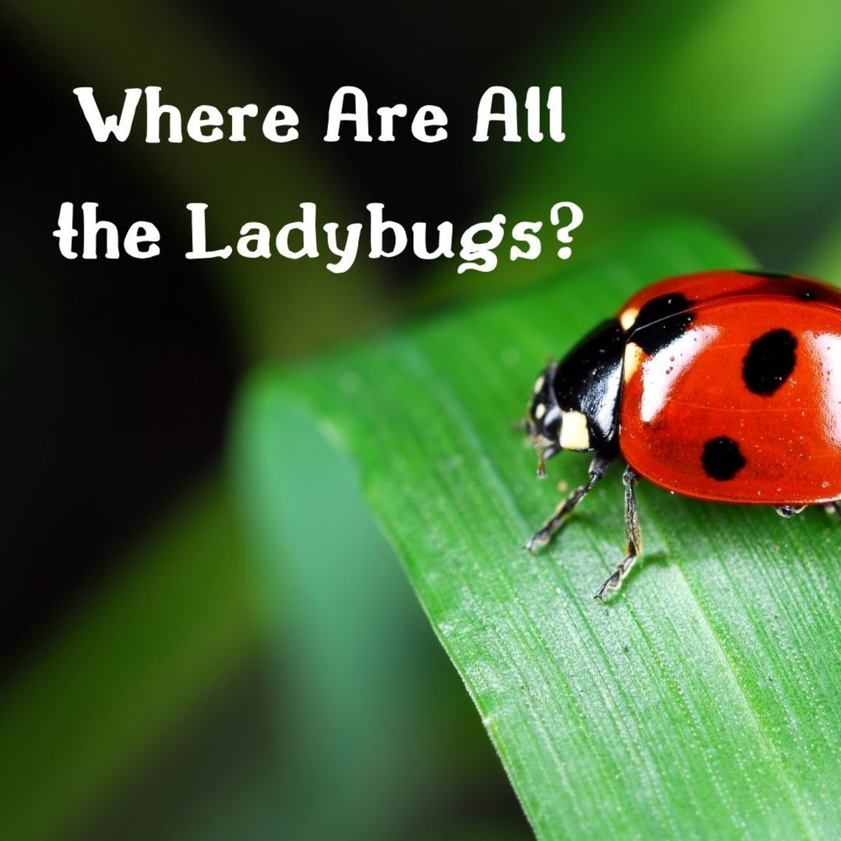 What has happened to the ladybugs?