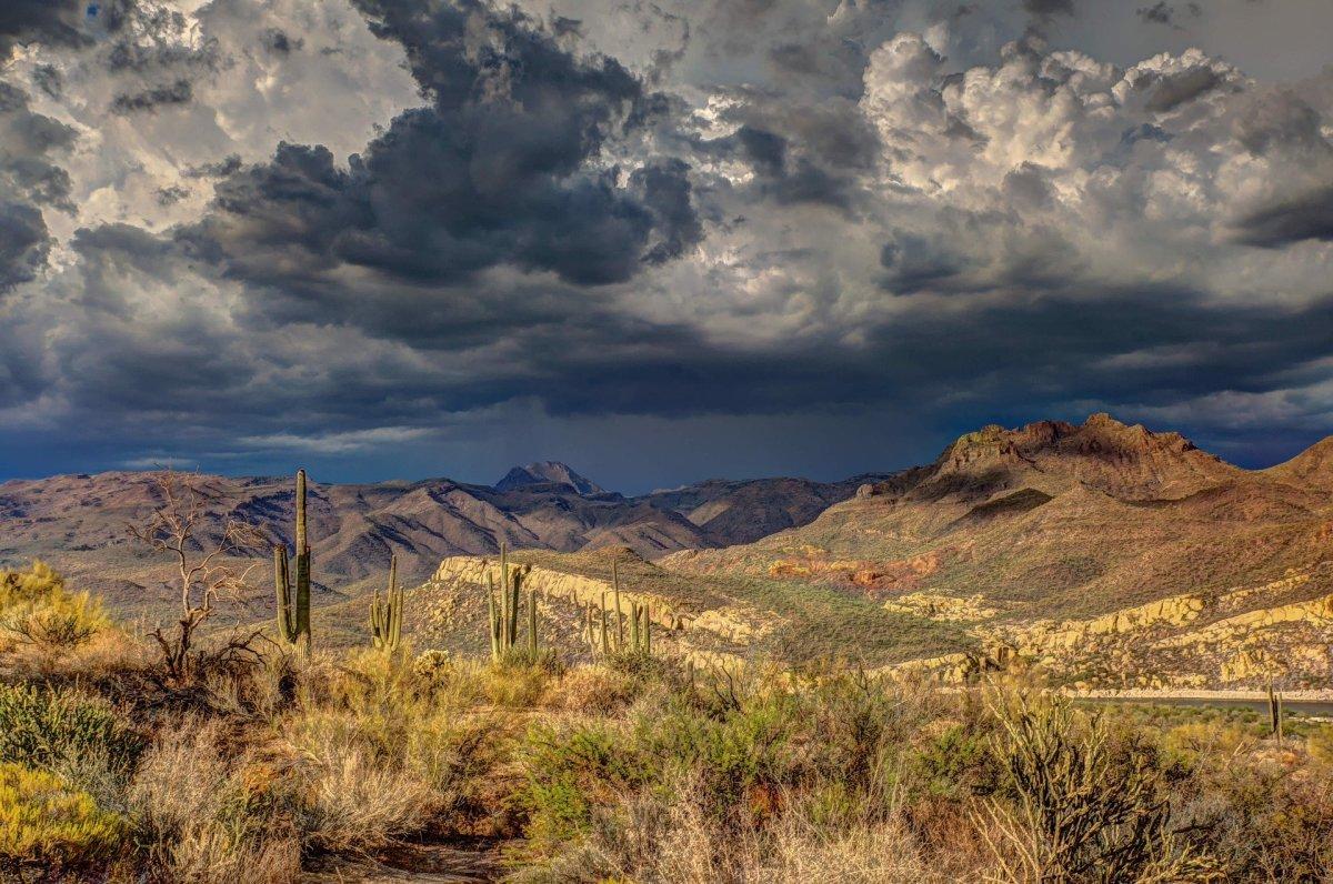Arid Cactus Cloud Formation Dark Clouds Daylight