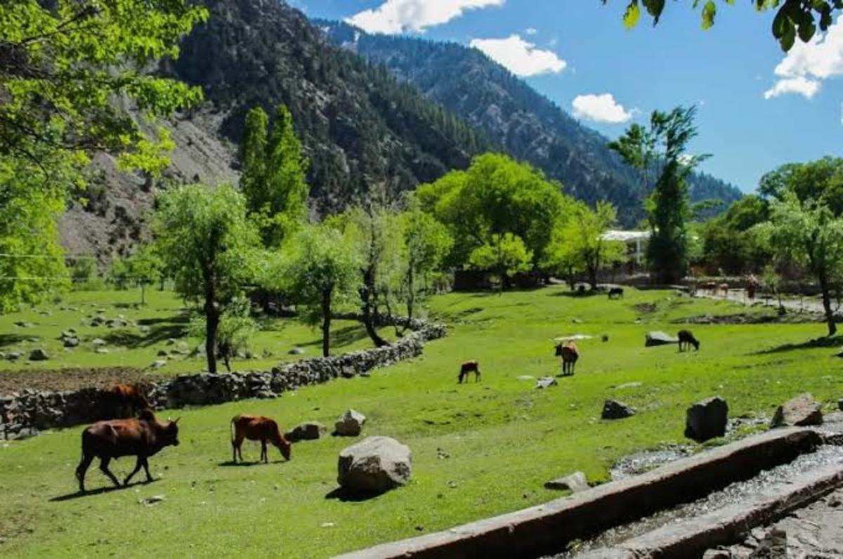 Kalash Valley, Chitral