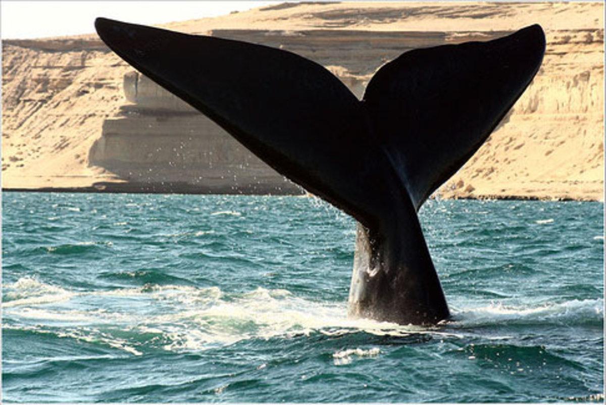 how-a-whale-senses-the-world