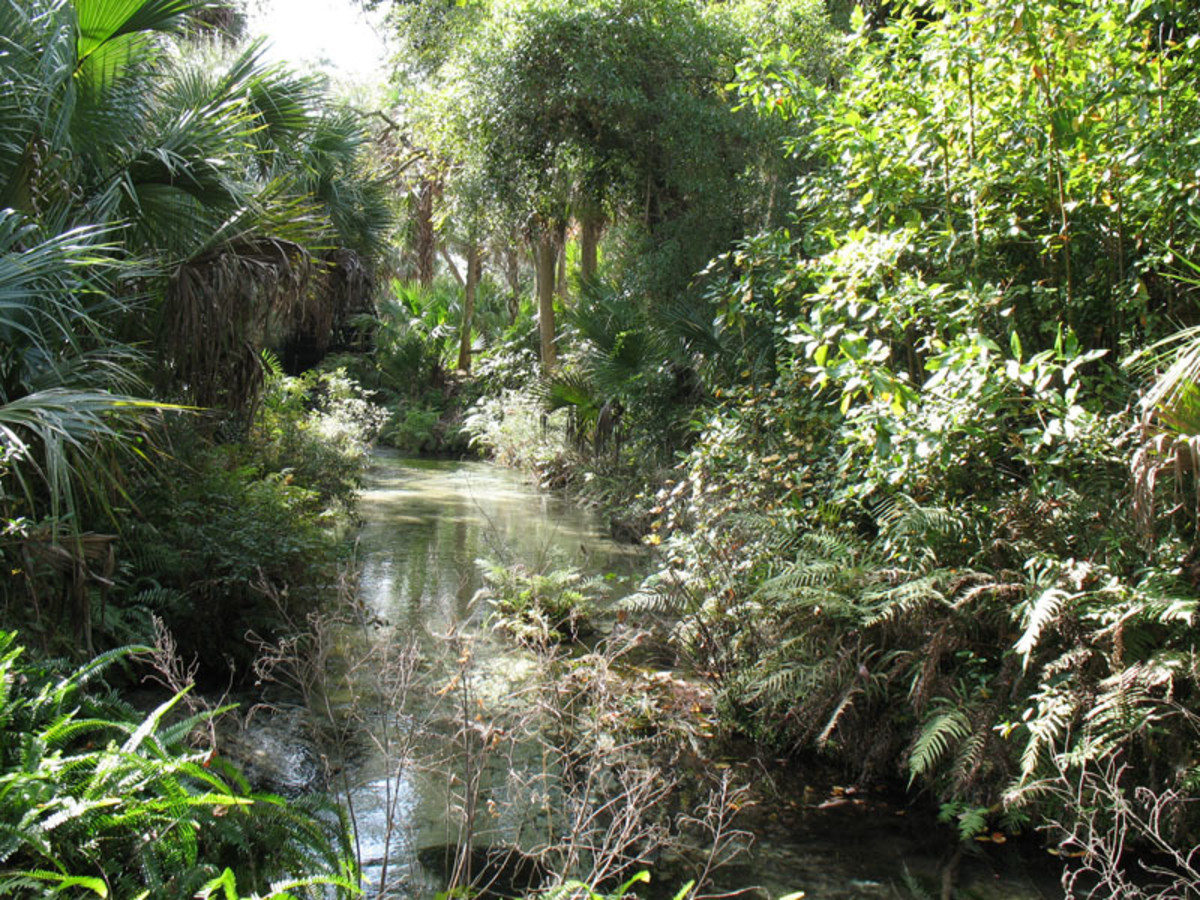 Pictured here is a waterway in Juniper Springs, one of the Ocala National Forest's four recreation areas.