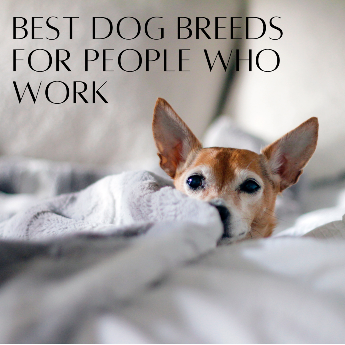 The 7 Best Dog Breeds For Someone Who Works All Day Pethelpful By Fellow Animal Lovers And Experts