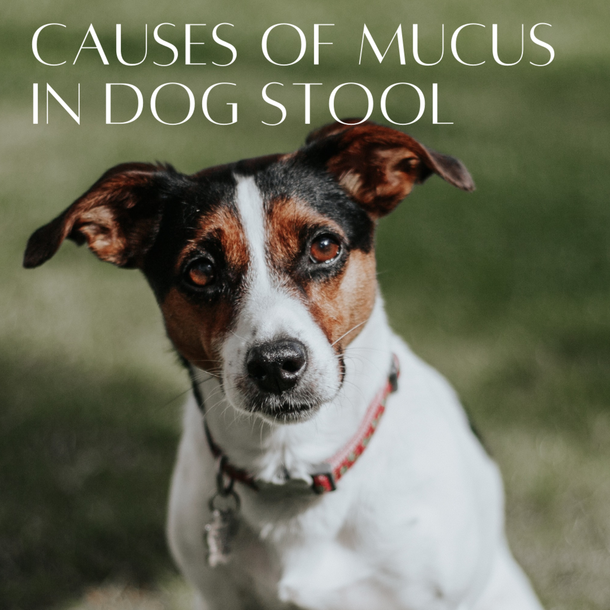 Causes of Mucus in Dog Stool