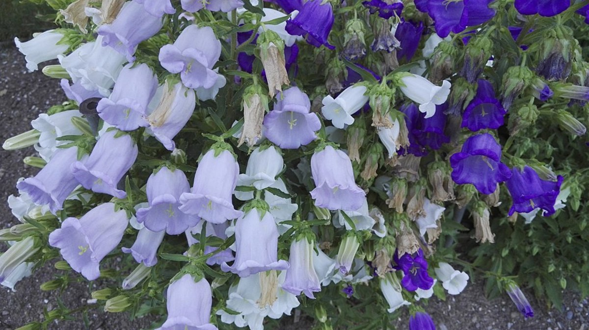 Blue and violet flowers.