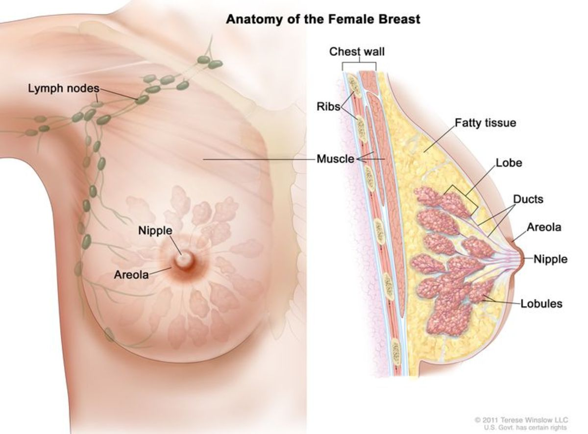 learn-about-breast-cancer