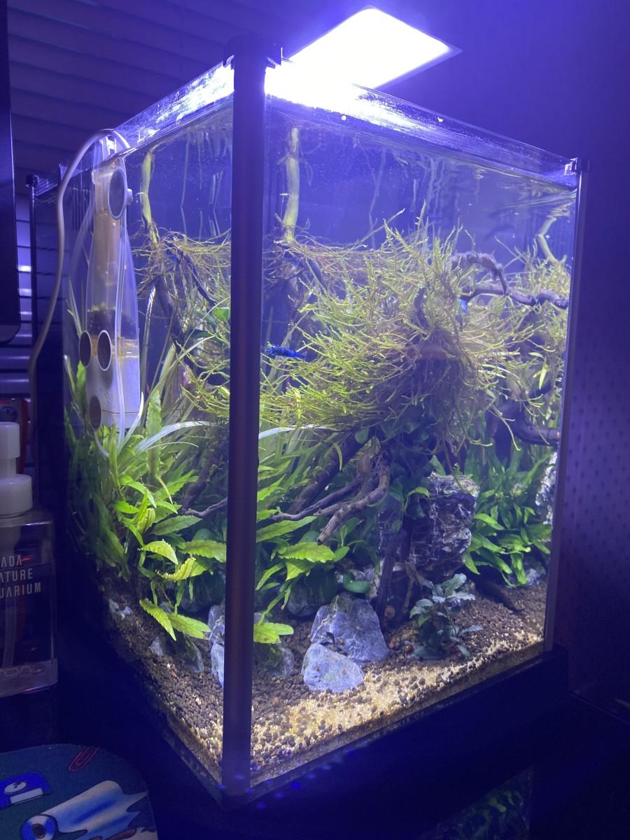 Nano Planted Low Tech Shrimp Aquarium