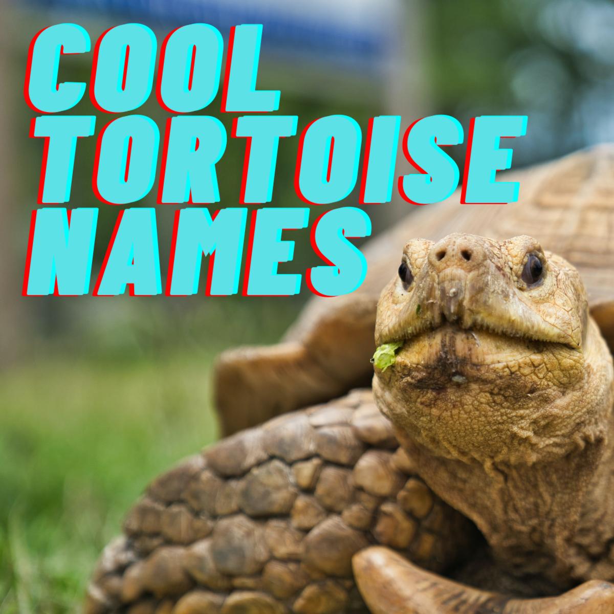 Best Pet Tortoise Names