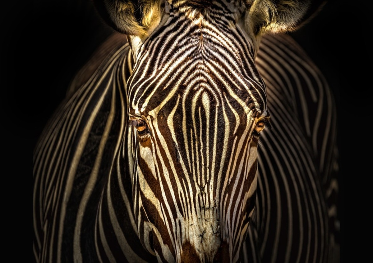 5 Unexpected Things You Might Not Know About Zebras