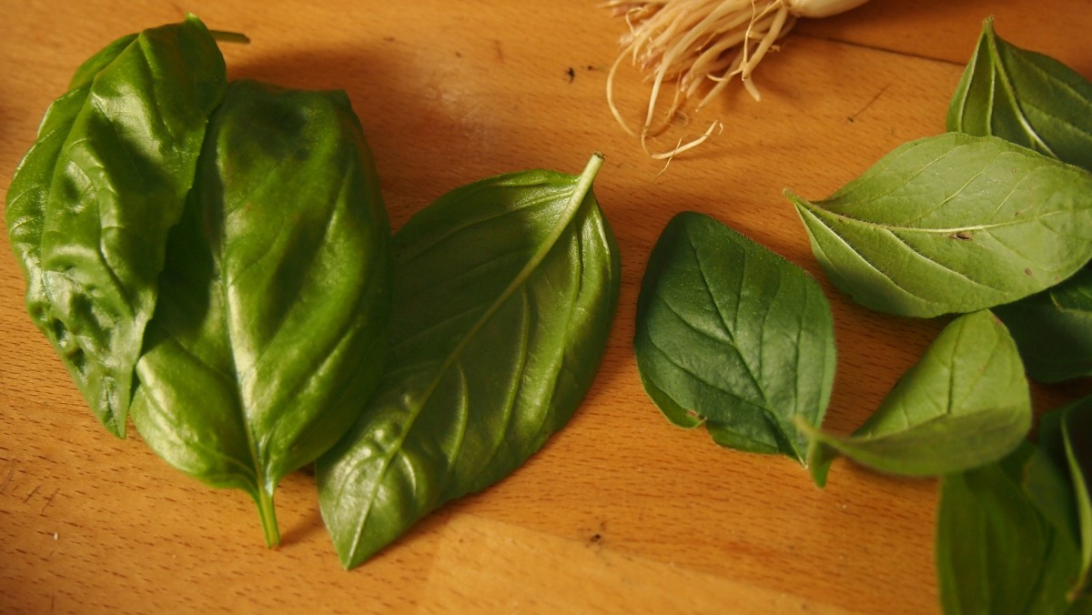 The flavor of fresh basil is far superior to the dried  kind you buy off the shelf. Fresh basil sends me into a fit of ecstasy.