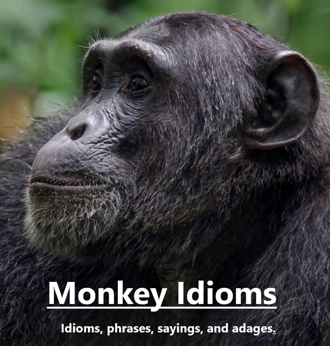 monkey-idioms