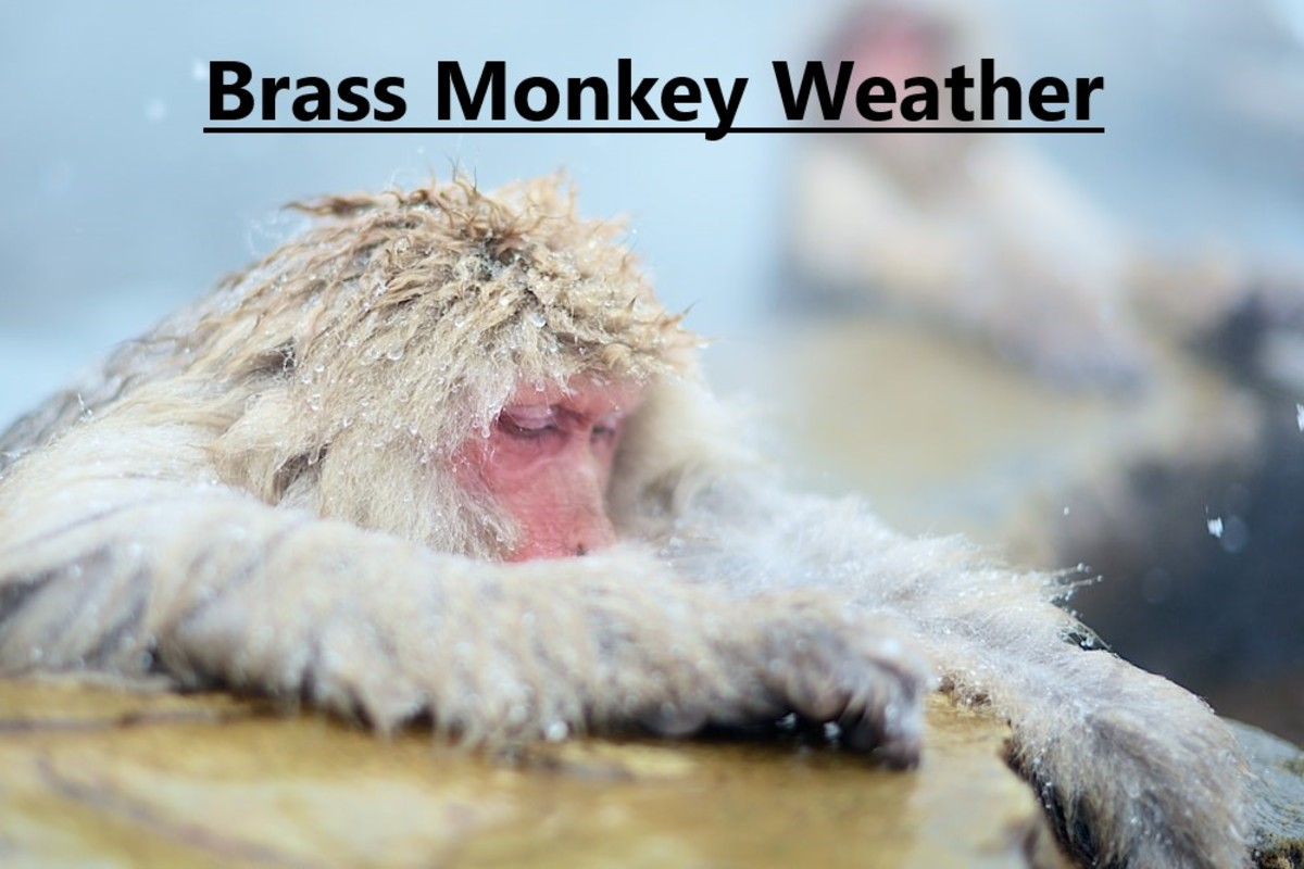 To say that it is freezing. Thought to have its origins in the brass rack (called a monkey) used to store cannonballs. In freezing weather, the cannonballs would contract in size and fall off the shelf.
