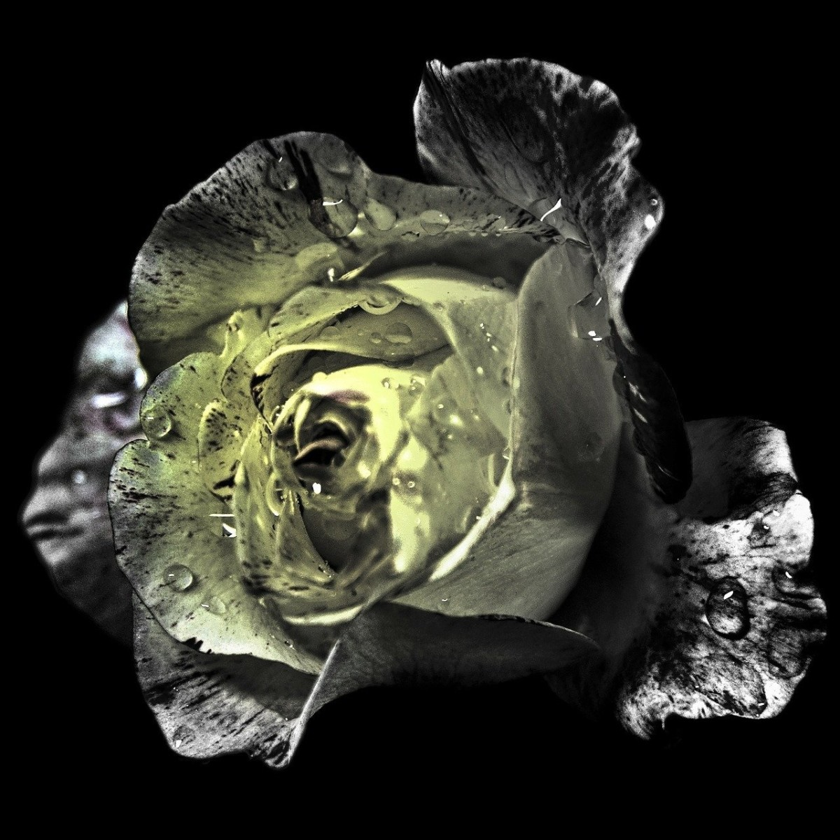 Personal development is like the opening of a rose; one petal at a time unfolds.