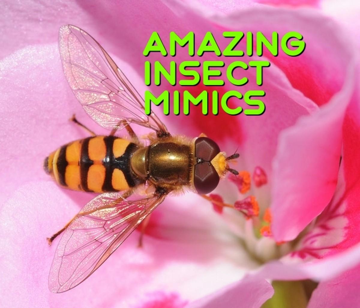 Amazing Insect Mimics