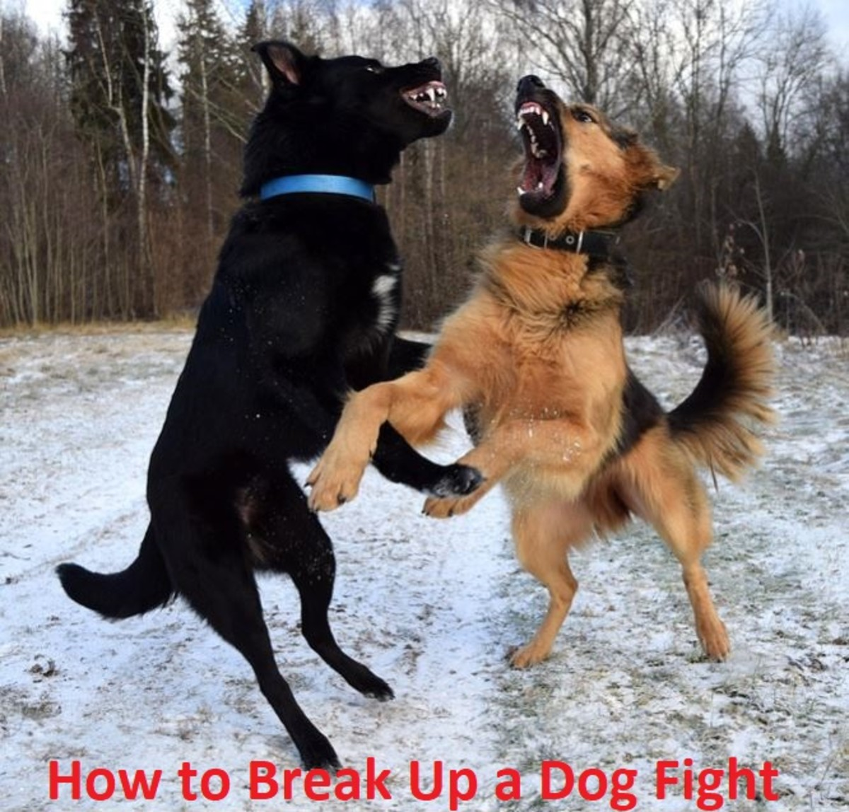 how-to-break-up-a-dog-fight-safely