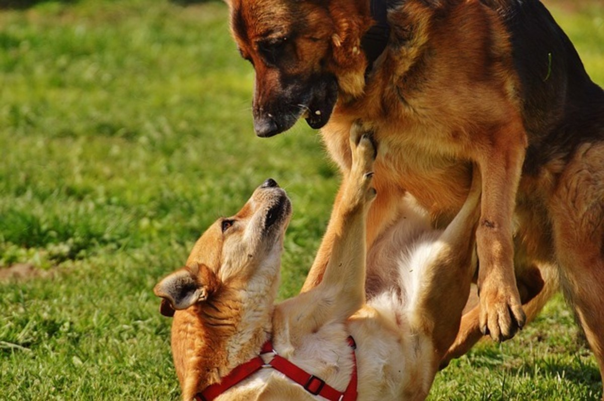 """Many loud """"dog discussions"""" resolve on their own, but sometimes they can escalate."""
