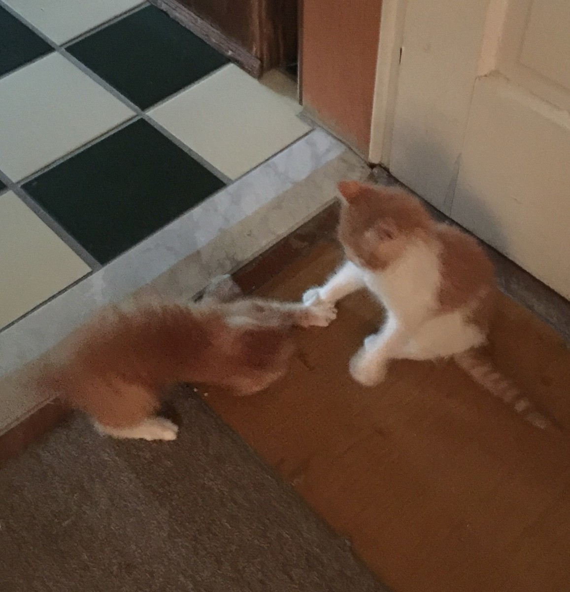 My fur babies playing when they were babies.