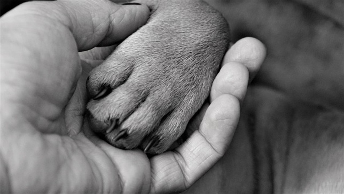 Make touching the paws a rewarding experience!