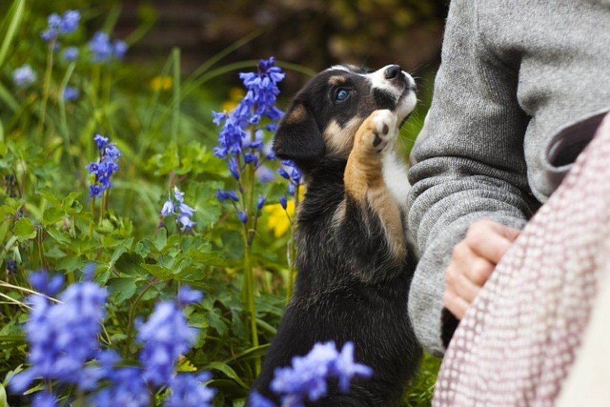 Make your puppy happy to being touched! A time may come where it will help you or maybe it'll even save your pup's life!