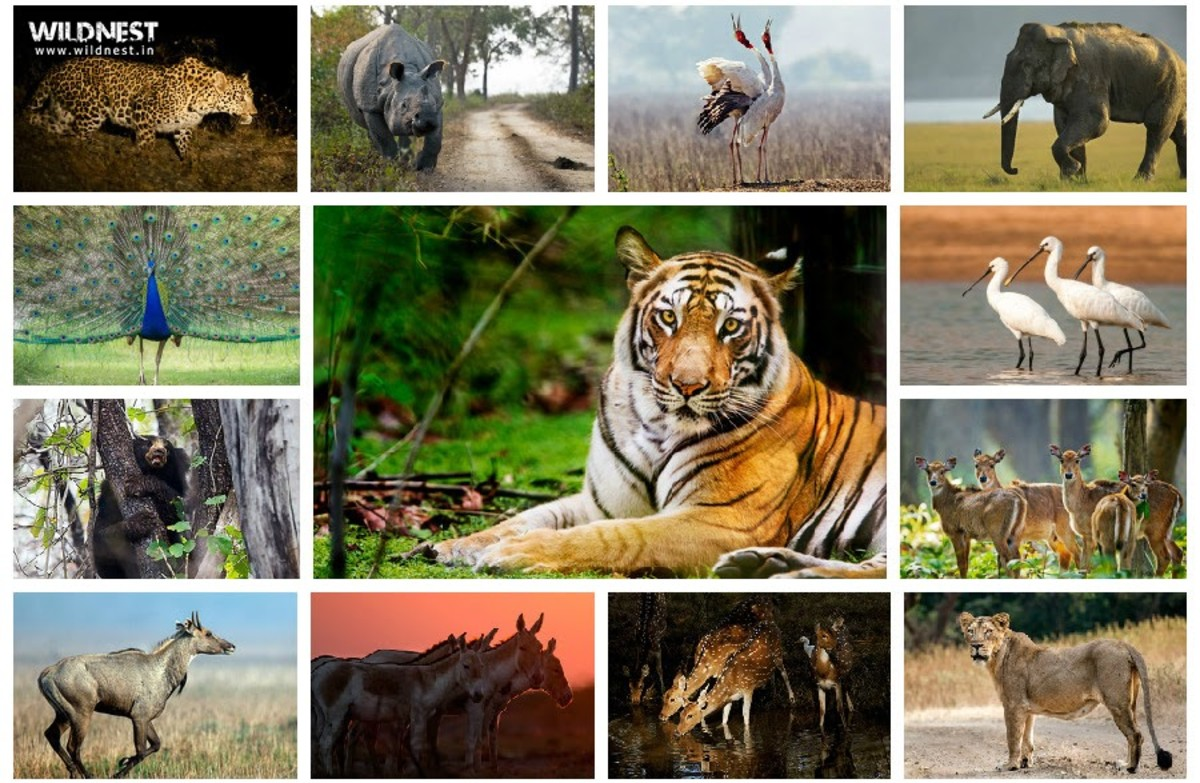 Wildlife of Animals and Plants and Its Management