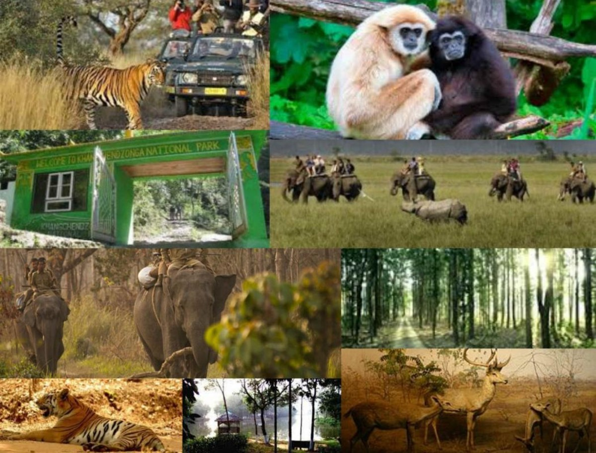 wildlife-of-animals-and-plants-and-its-management