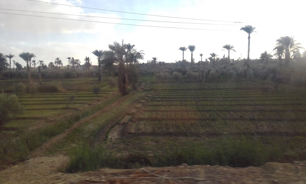 Green fields along the way to Wadi Al Rayan Protected Area.