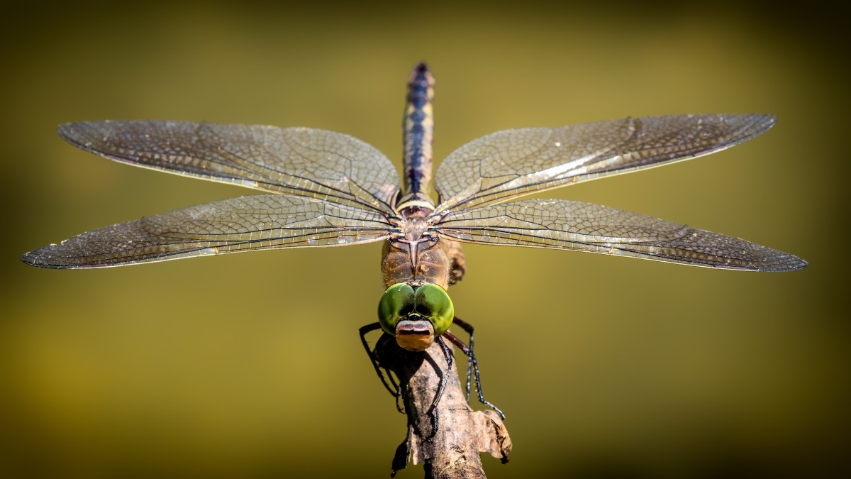 This article will provide information about the names of different kinds of insects in the Italian language.