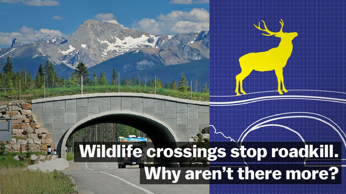 Wildlife Bridges