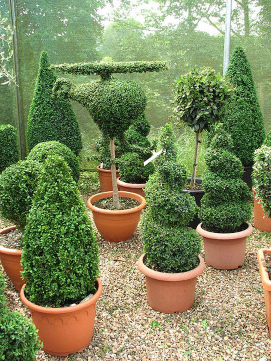 Pruning your shrubs and bushes can be as fancy or as simple as you want!