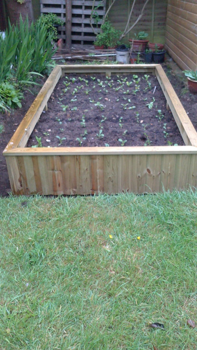 My raised-bed in place with vegetables in it now